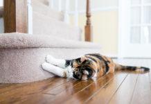 Jak wygląda zaćma u kota?